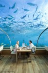 """Submerged In the Ithaa Undersea Restaurant!"""