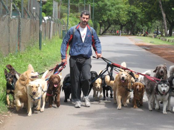 HOW MANY DOGS SHOULD BE WALKED? (At Once) – AMERICA ON COFFEE