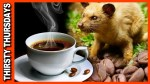 Kopi Luwak is the World's Most Expensive Coffee. Here Are Some Facts: